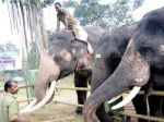 Elephant dies amid treatment in Mudumalai