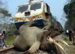Express train hits an elephant in Coimbatore