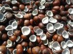 Rajapur,Copra improves on renewed demand