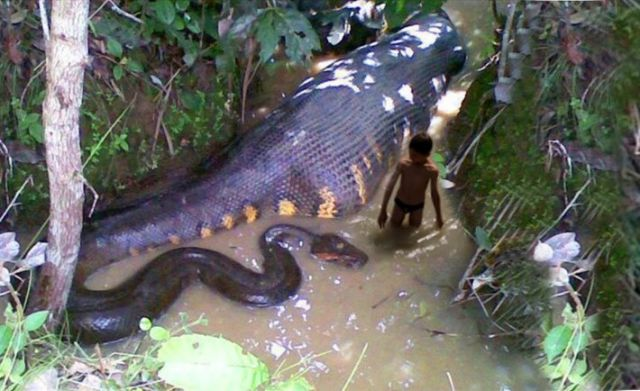 Know about The Biggest Snakes of World