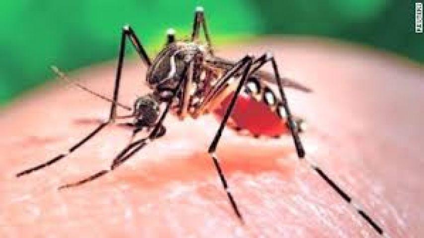 Olympic Games in Rio de Janeiro should delay due to Zika virus