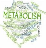 Lose More Weight By Boosting Your Metabolism!