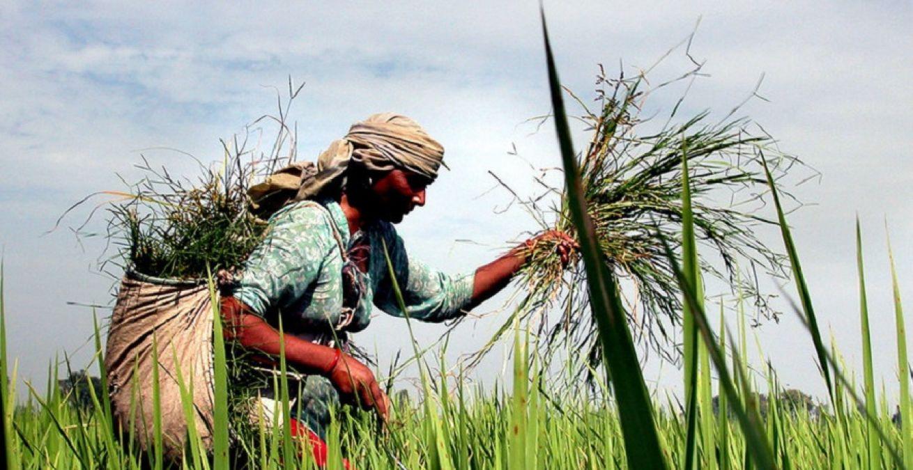 राजकोट लोकसभा सीट: भाजपा के गढ़ में किसान हैं मुख्य मुद्दा, क्या होगा इस बार ?