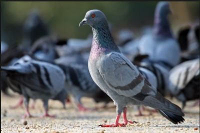Cruel human tortured a pigeon to death in his resident building