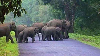 इंसानो से अस्तित्व की लड़ाई लड़ते हाथी