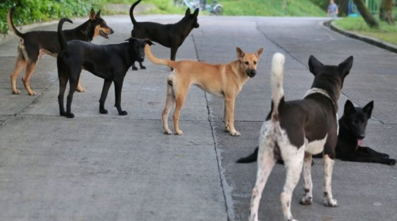 21 years old woman assaulted and left on the road for Stray dogs