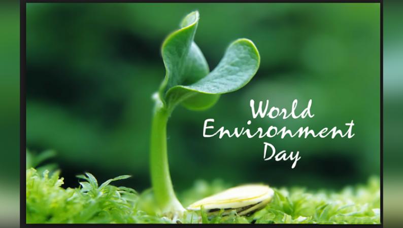 विश्व पर्यावरण दिवस: पर्यावरण के लिए वृक्षारोपण क्यों है जरुरी