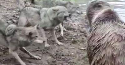 Video : आक्रामक भालू ने पर्यटकों के सामने कुछ ऐसा, रूह काँप जाएगी