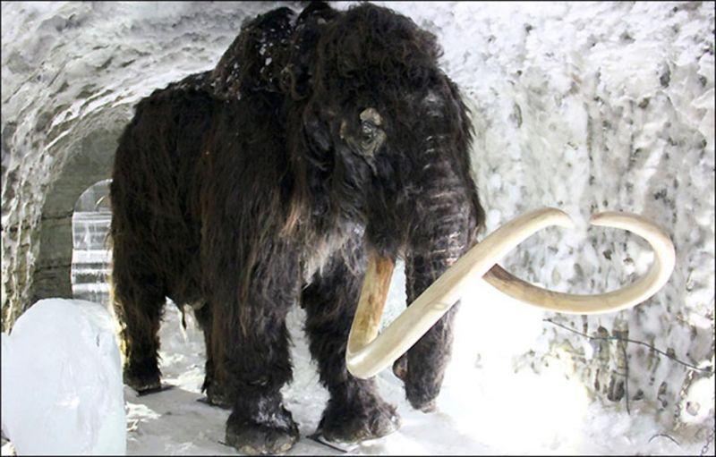 रूस के वैज्ञानिक लुप्त हो रही विशालकाय प्रजातियों को लाएंगे वापस !