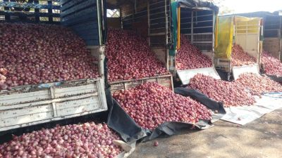Onions being sold for Rs 80 a kg in Maharashtra, prices may increase further