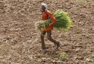 आरबीआई पैनल ने कृषि क्षेत्र के विकास के लिए सरकार को दिया यह सुझाव