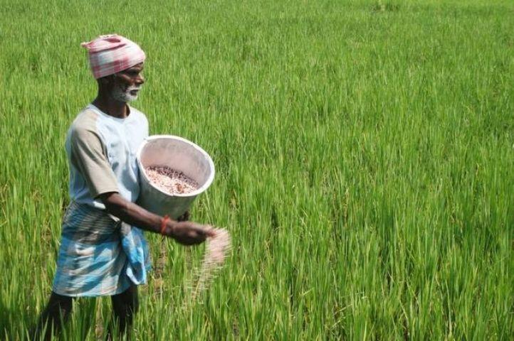 अच्छी बारिश यानि कृषि क्षेत्र मजबूत