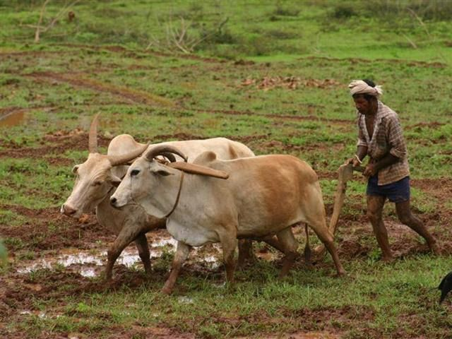 किसानो ने की 4% ब्याज पर पांच लाख रूपए कृषि ऋण की मांग