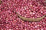 भारत खरीदेगा 10000 टन प्याज