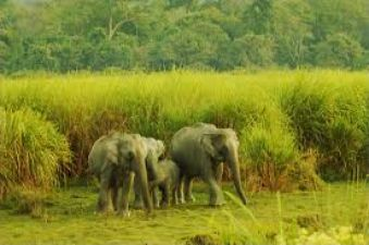12वी पास वालो के लिए असम वन विभाग में निकली भर्ती