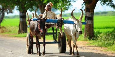 Tamil Nadu Agricultural भर्ती : 20 नवंबर तक करें आवेदन, नौकरी के लिए ऐसे करें आवेदन