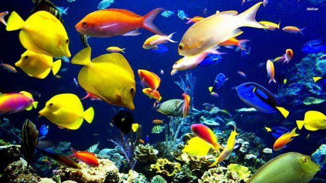 मछलियों से जुडी रोचक बातें...