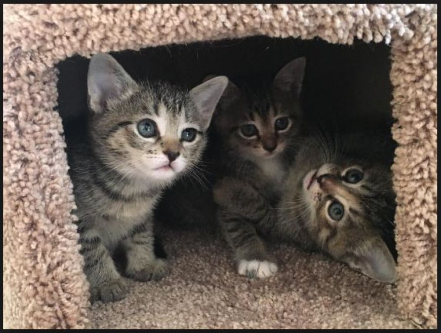 A 30-year-old man allegedly set three kittens on fire inside a burning carton