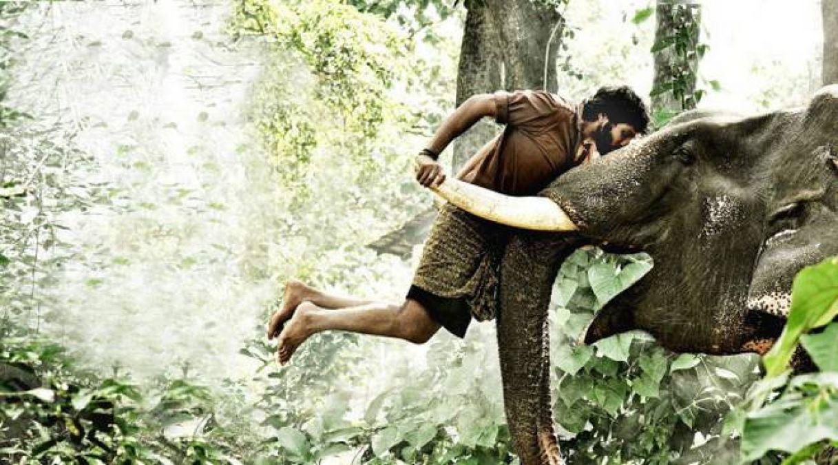 Filmy dream sent a man to hospital as he tried to kill an elephant