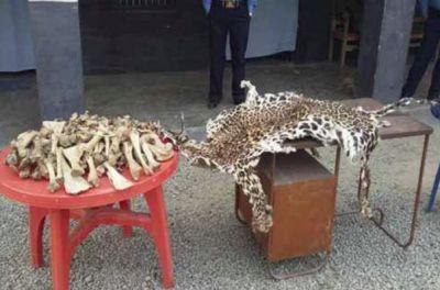 Police arrested two men for smuggling tiger parts in Nagpur