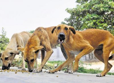 A six-year-old boy killed by stray dogs in Bhopal