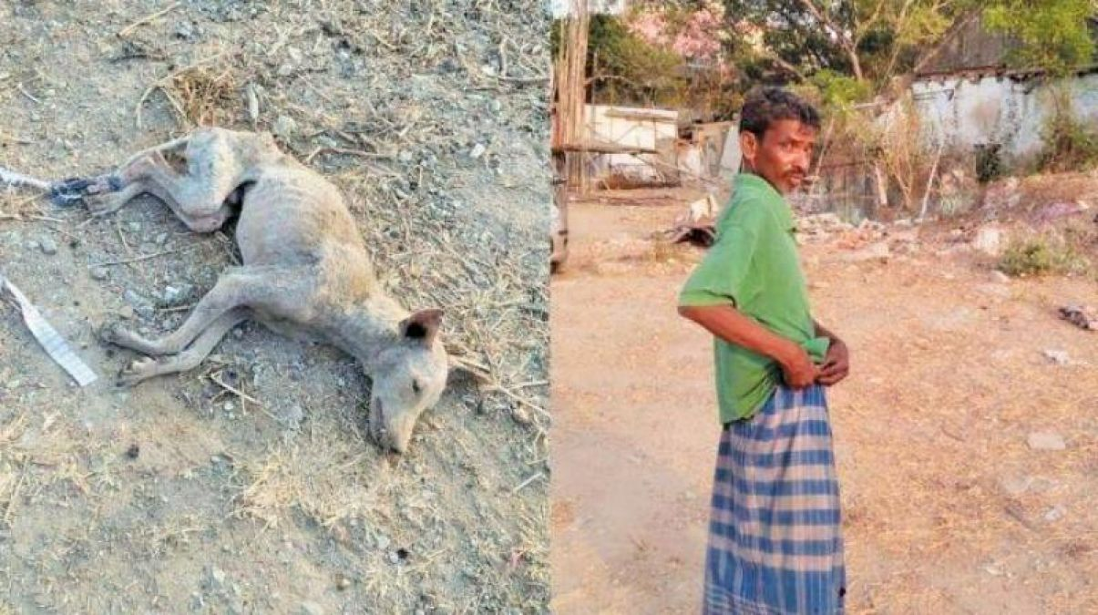 Chennai man beats a dog to death, arrested