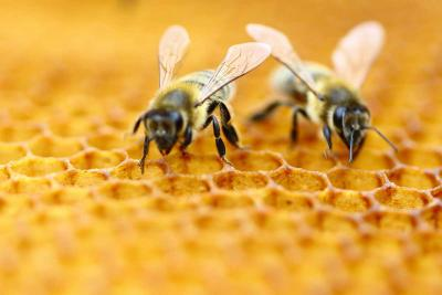 Amazing facts about honey Bee, you won't believe