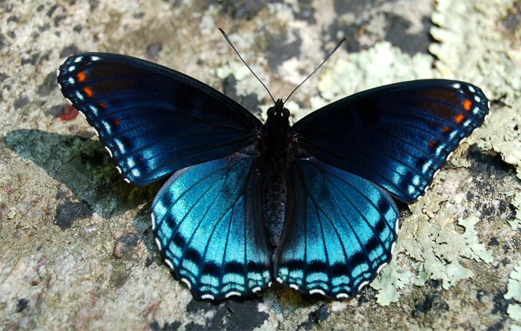 Amazing facts: 20 Fascinating Facts About Butterflies