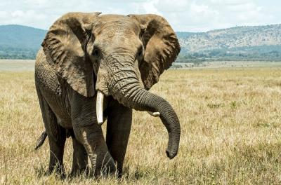 Amazing Facts: Fascinating facts about Elephants