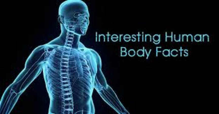 Amazing facts: Facts about the Human body