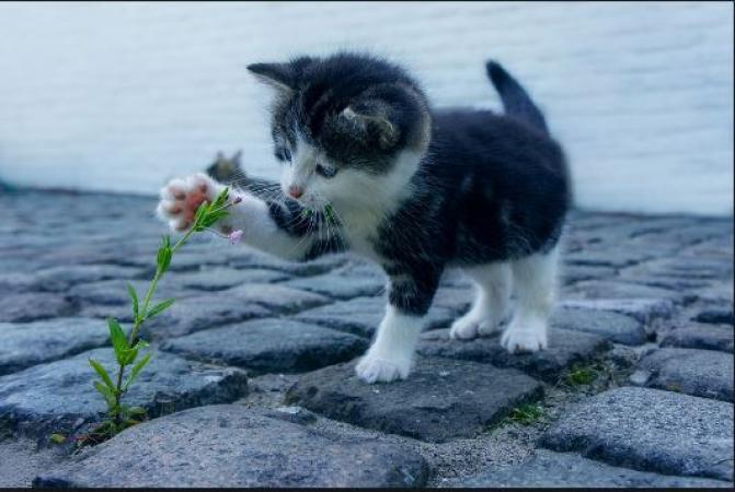 Amazing facts: Do you know these interesting facts about Cats?