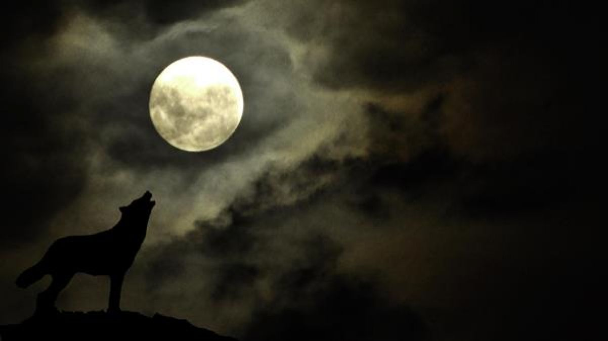 Amazing Facts: Interesting facts about Wolves