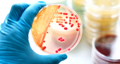 Amazing Facts: Thing you probably didn't know about Bacteria