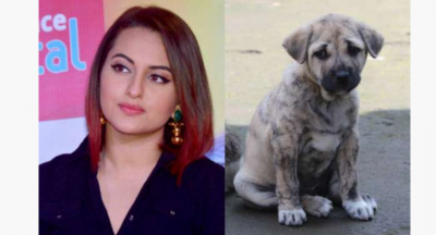 This actress gets angry after hearing coronavirus spread from dog and cat