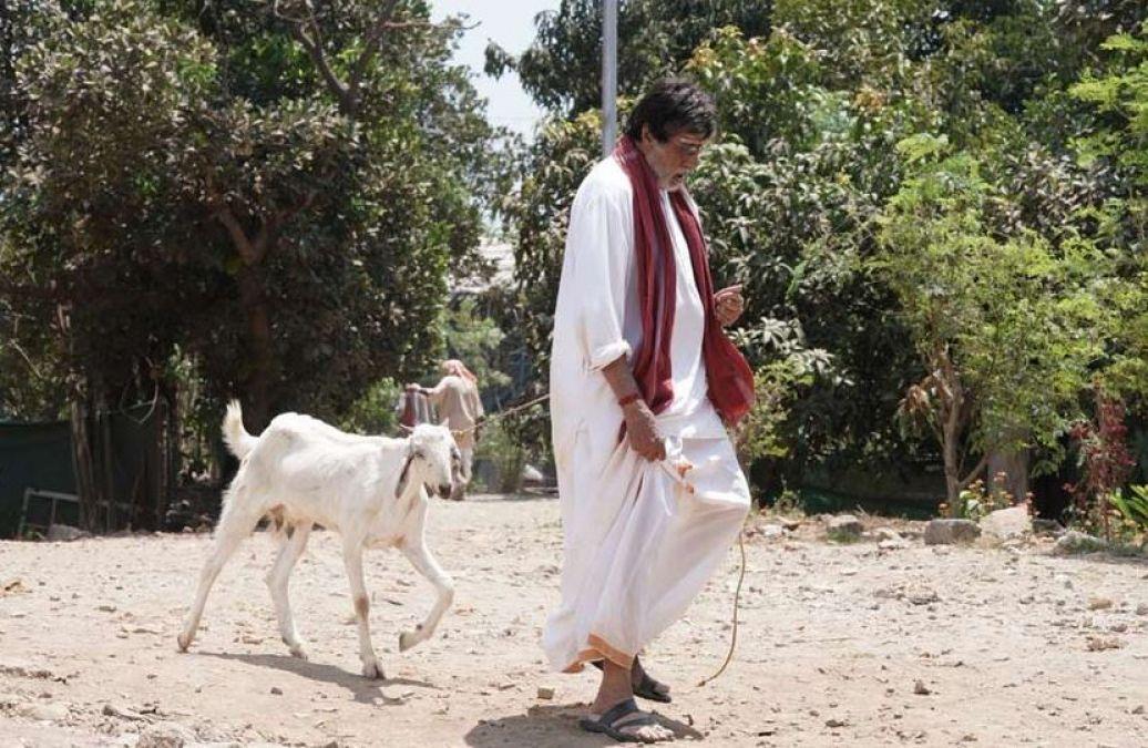 बकरी चराते हुए नजर आए महानायक अमिताभ, सोशल मीडिया पर जमकर वायरल हो रही तस्वीर