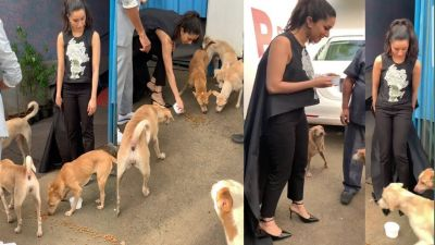 Shraddha Kapoor Showing Love For Street Dogs, Watch Video