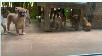 Twinkle Khanna Shares Adorable Video Of Puppies, Watch Here