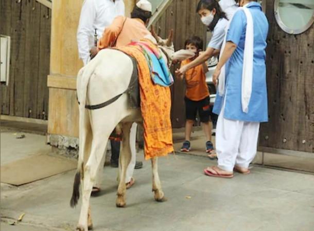 गौसेवा करते नज़र आए तैमूर अली खान, गाय को चारा खिलाते वायरल हुई फोटो
