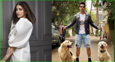 Anushka had fun seeing Varun's ripped jeans, said- 'Dogs bitten...'