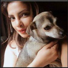 36 हजार की जैकेट के बाद प्रियंका ने अपने कुत्ते को दिया एक और कीमती तोहफा