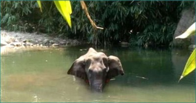 Bollywood actresses angry over killing pregnant elephant