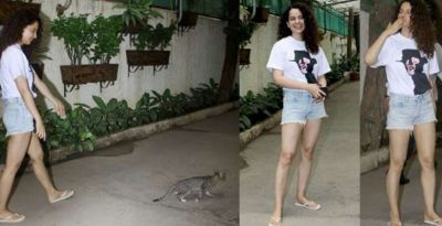 Bollywood Queen plays with a cat in Mumbai Street