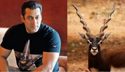 Blackbuck poaching case: Rajasthan HC orders this big order on three appeals related to Salman Khan