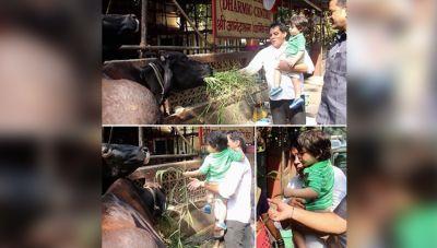 गाय को घास खिलाने पहुंचे तैमूर, साफ़ नजर आया पशु प्रेम