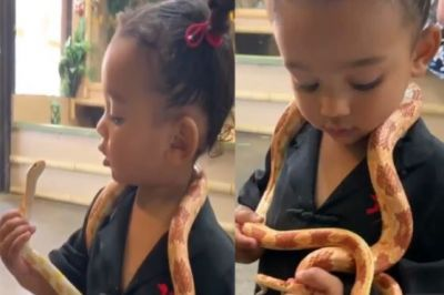 Video: The 2-year-old daughter of this actress playes with snakes, watch shocking video here