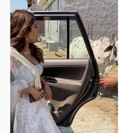 Video: Nikki Tamboli's hilarious reaction on seeing a cow asked, 'Maregi to nahi?'