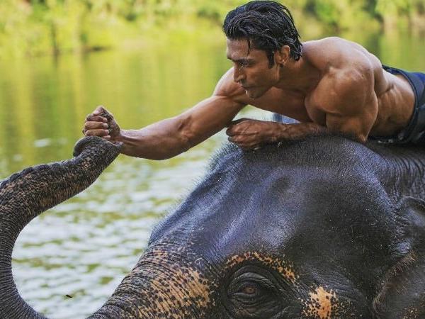 Junglee box office collection: Vidyut Jammwal starrer stays strong at BO