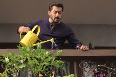 This Actress Wants To Cook 'Gajar ka Halwa' for Salman Khan