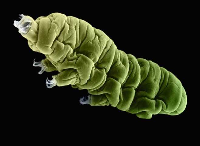 Microscopic creatures broke the record for surviving in a frozen state