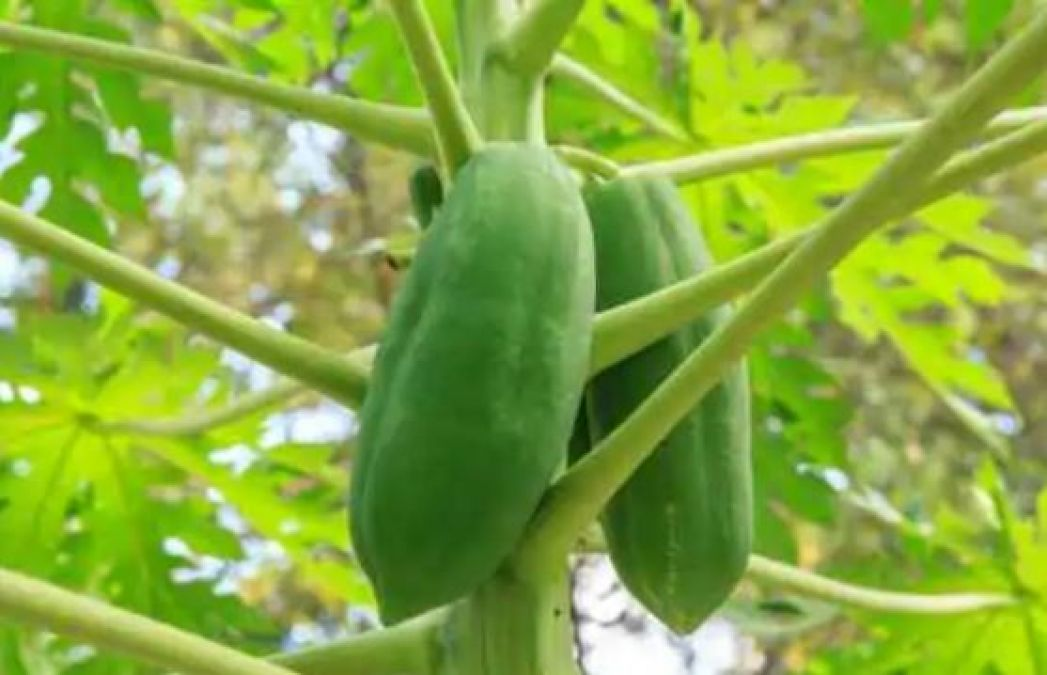 Get rid of unwanted hair permanently with this raw papaya pack